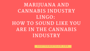 cannabis business attorney and the managing attorney