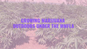 licensed cannabis growers
