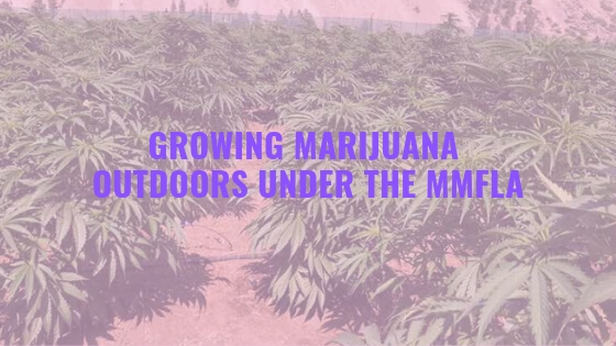 licensed cannabis growers