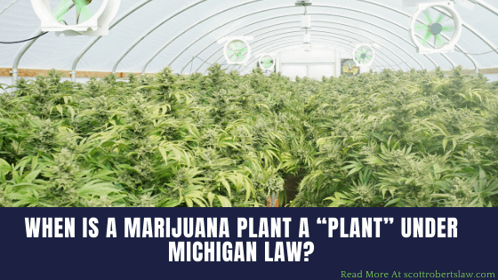 "Marijuana-Plant-a-""Plant""-under-Michigan-Law"